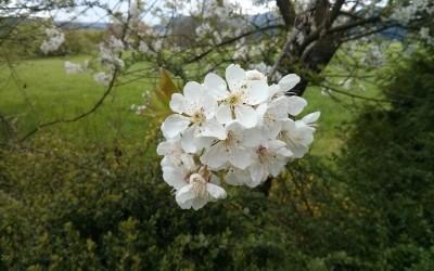 Impressionen aus dem Garten am 26. April 2015