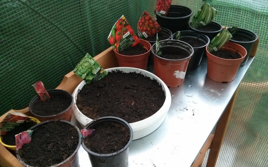 Bio Gemüse anpflanzen – Tag 1: Samen setzen